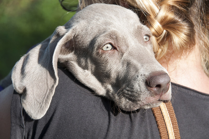 11 things the dog knows about you
