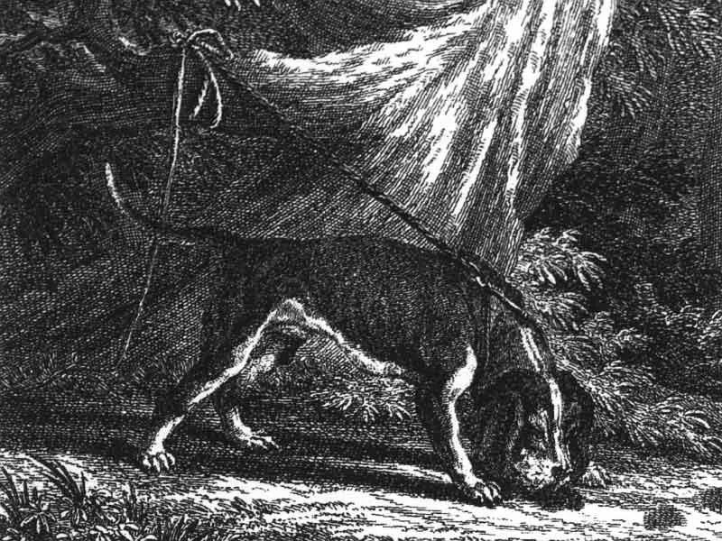 History of Weimaraner dogs