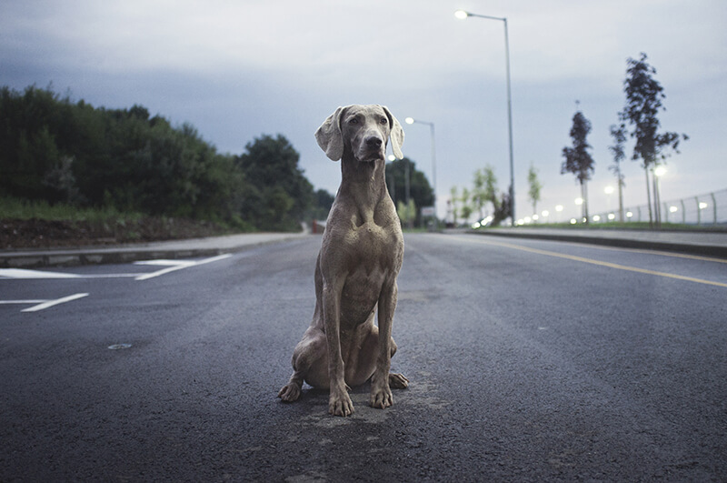 How dogs help us keep our spirits healthy