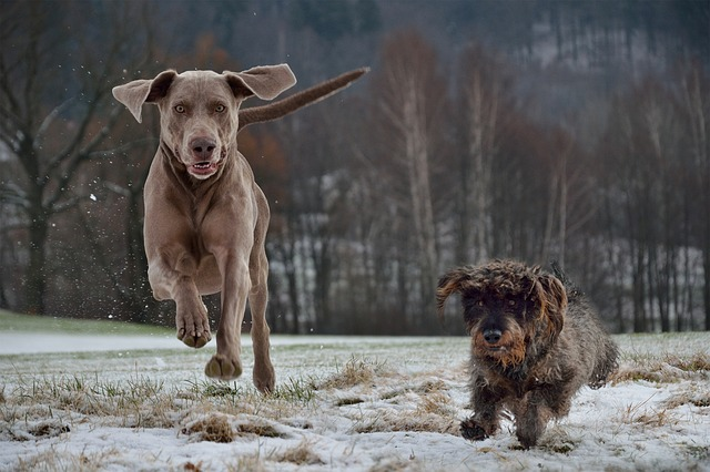 What to do when a dog attacks your dog