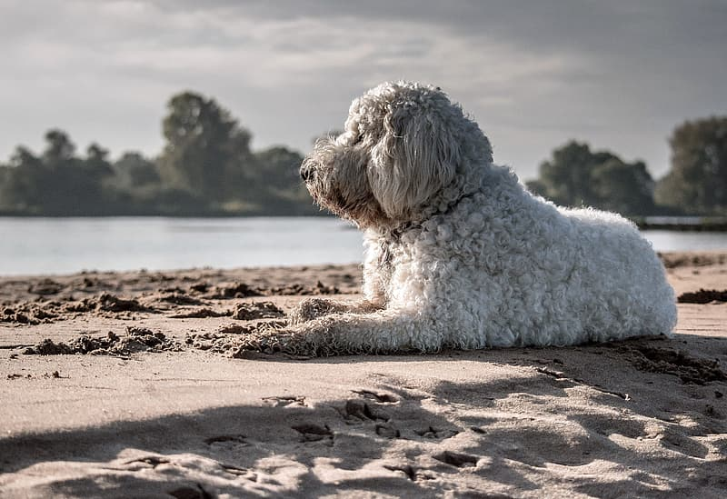 How to prevent heat stroke in dogs