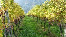 Rebflächen in Südtirol
