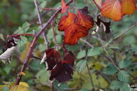 2015-10_25_Herbstpower09