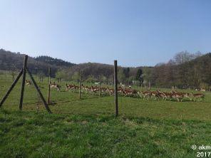 2017-04-08_Bendersbachtallauf01