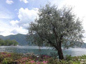2017-05-20_LuganoTag102