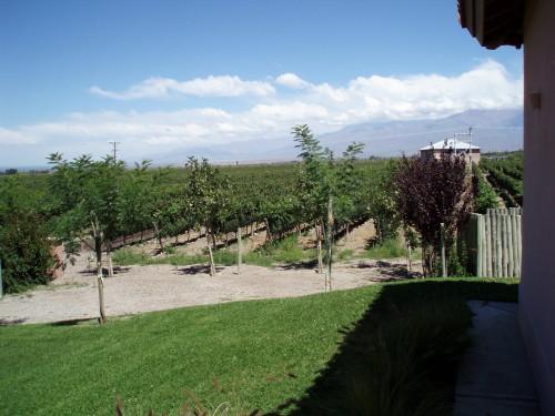 Valle de Uco (Argentinien), 900m bis 1200 m Höhe