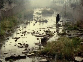 a andrei tarkovsky stalker dvd review dvd comparison mk2-1
