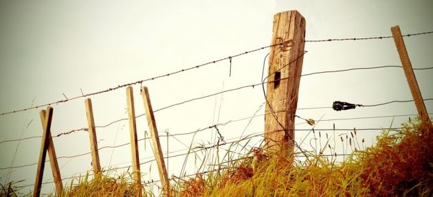 grass-fence-border-property
