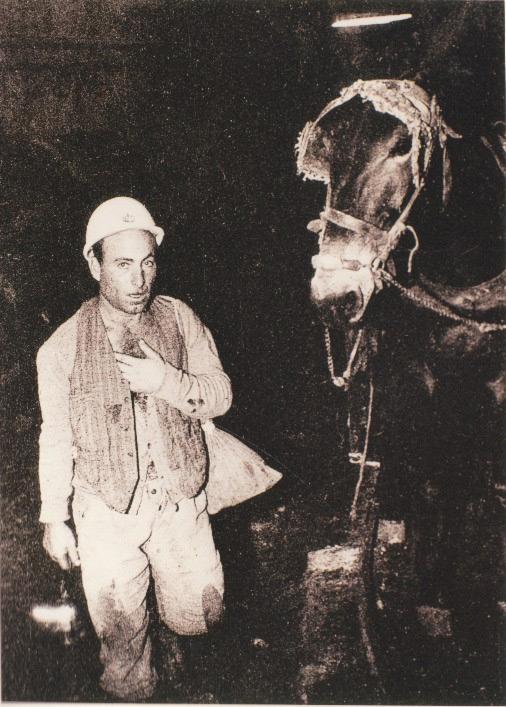 miner-donkey