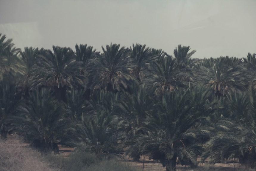 erez-avissar_israel024