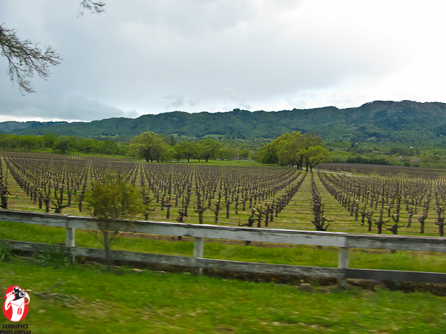 Sonoma means wine country