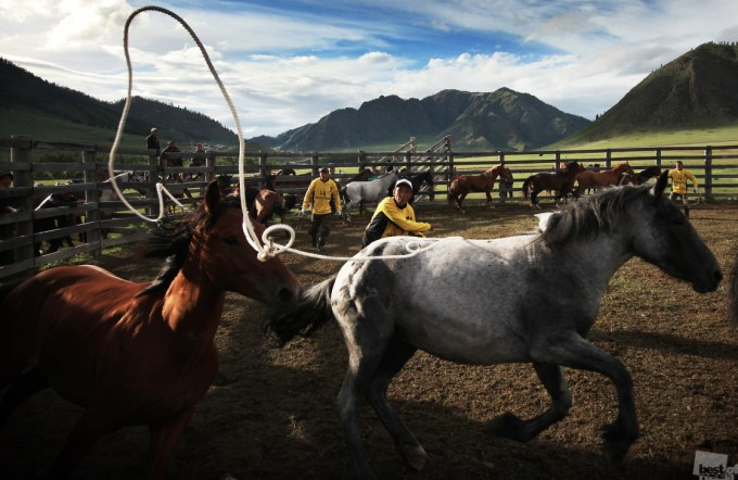 Altai version of the world famous rodeo. Onguday. Photo by  Alex/Alexandra Busova