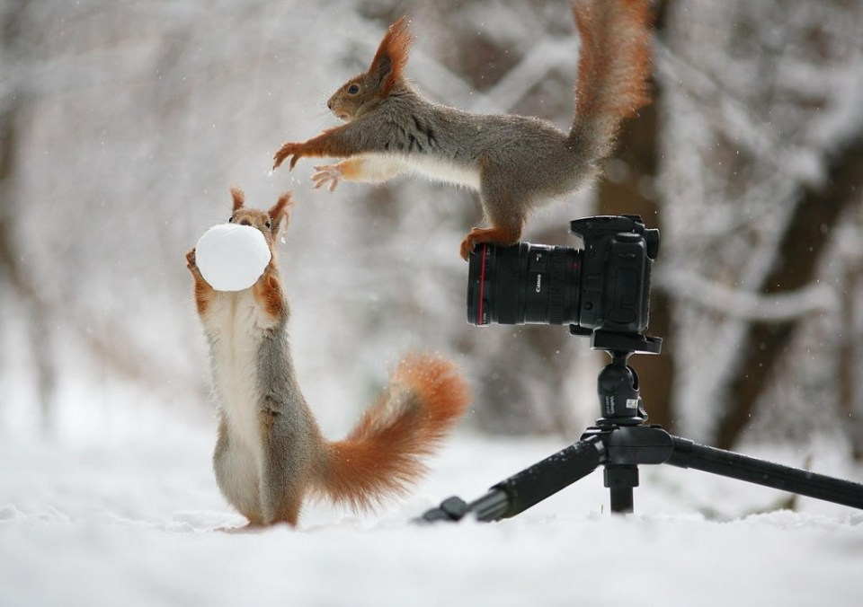 Playful_Squirrels3