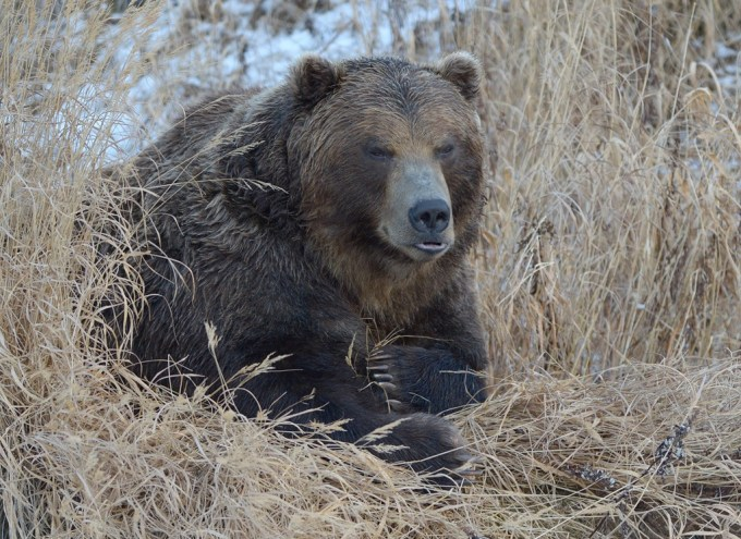 bears_kamchatka33
