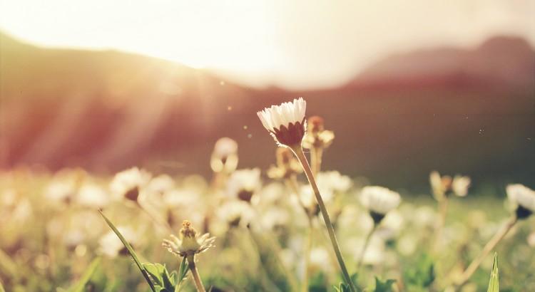 Der Schmerz deines einst gebrochenen Herzens sitzt im Vorraum durch das jede neue Liebe gehen müssen wird, um es in dein Herz zu schaffen. Verschließt du den Vorderraum um die Liebe und auch dich zu schützen, kann dich wahres Glück nie wieder erreichen. Nicht der Schmerz blockiert den Weg zu deinem Herzen, sondern deine Angst, deine Feigheit. Wer dich wirklich will, wird dem lange wartenden Schmerz ins Gesicht blicken können ... und jetzt öffne langsam die Tür. Ich weiß es tut weg ...