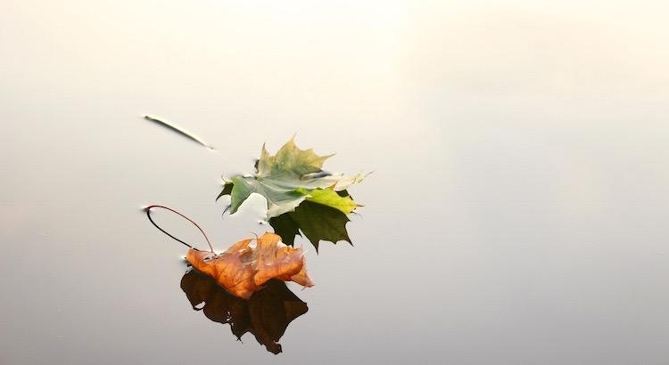 Sei wie ein Baum und lasse die toten Blätter fallen. - Mevlana Dschelaluddin Rumi