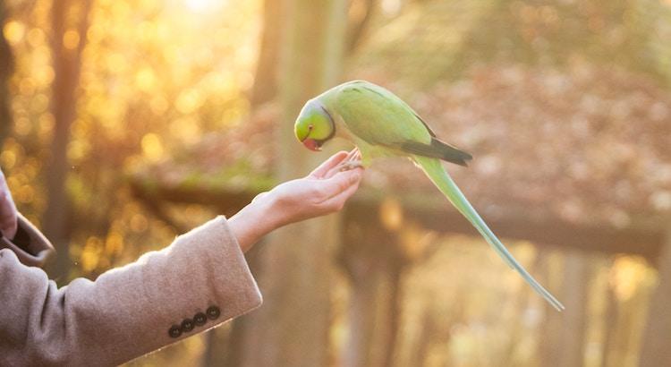 Haltet an euren Träumen fest, denn wenn die Träume sterben ist das Leben ein Vogel mit gebrochen Flügeln, der nicht fliegen kann. - Langston Hughes