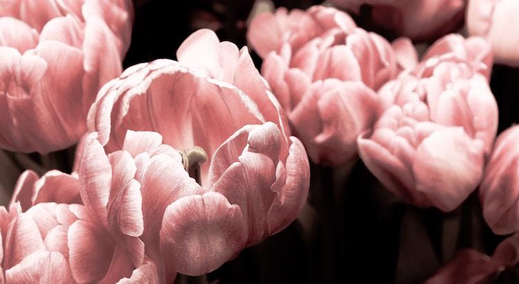 Eine Blume macht sich keine Gedanken, ob sie mit der Blume neben ihr mithalten kann, sie blüht einfach. - Unbekannt