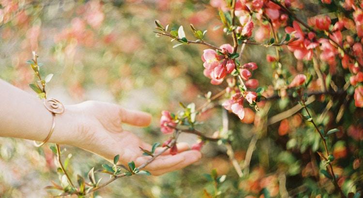 Wenn man sich nur in die Blüten und nicht die Wurzeln eines Menschen verliebt, weiß man ab Herbst nicht mehr, was man tun soll. - Unbekannt