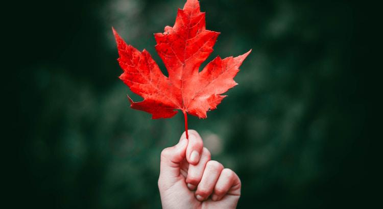 Man sieht die Blumen welken und die Blätter fallen, aber man sieht auch die Früchte reifen und neue Knospen keimen. - Johann Wolfgang von Goethe