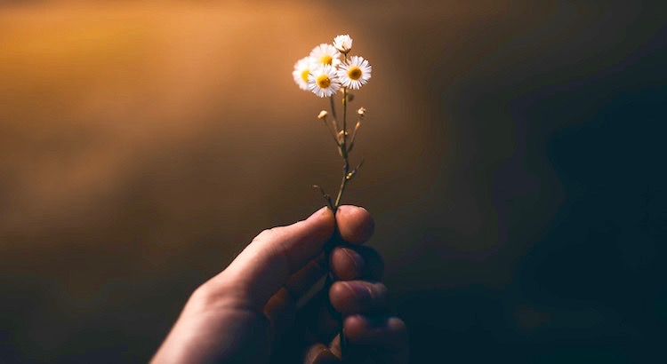 Um glücklich zu sein im Leben brauchen wir etwas zu arbeiten, etwas zu lieben und etwas, auf das wir hoffen können. - Joseph Addison