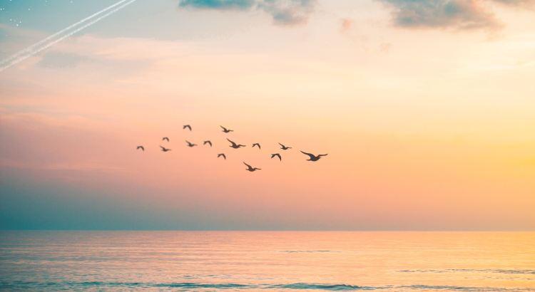 Das Leben aller Lebewesen, seien sie nun Menschen, Tiere oder andere, ist kostbar, und alle haben dasselbe Recht, glücklich zu sein. Alles, was unseren Planeten bevölkert, die Vögel und die wilden Tiere sind unsere Gefährten. Sie sind Teil unserer Welt, wir teilen sie mit ihnen. - Dalai Lama