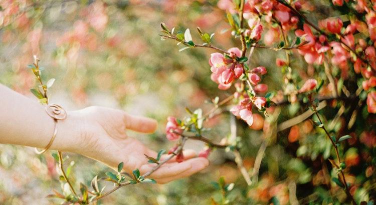Zufriedenheit ist ein stiller Garten, in dem man sich ausruhen kann. - Ernst Ferstl