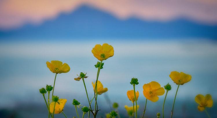 Die Welt ist voller Wunder. Wer sie findet, hat Glück. Wer sie versteht, wird glücklich. - Esragül Schönast