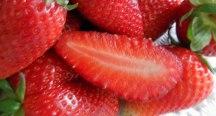 erdbeer-header