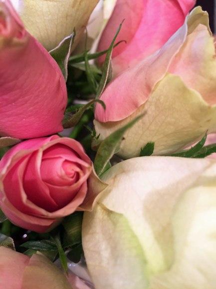 rosen-nah-natur2.jpg