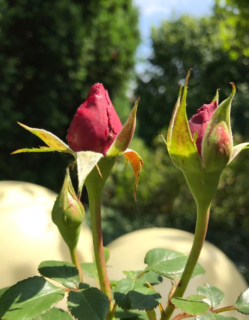 rose-garten.jpg
