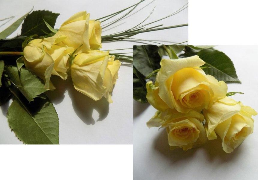 rosen-gelb-blo.jpg