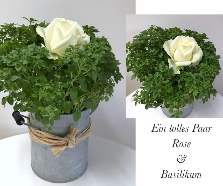 roseund-basilikum