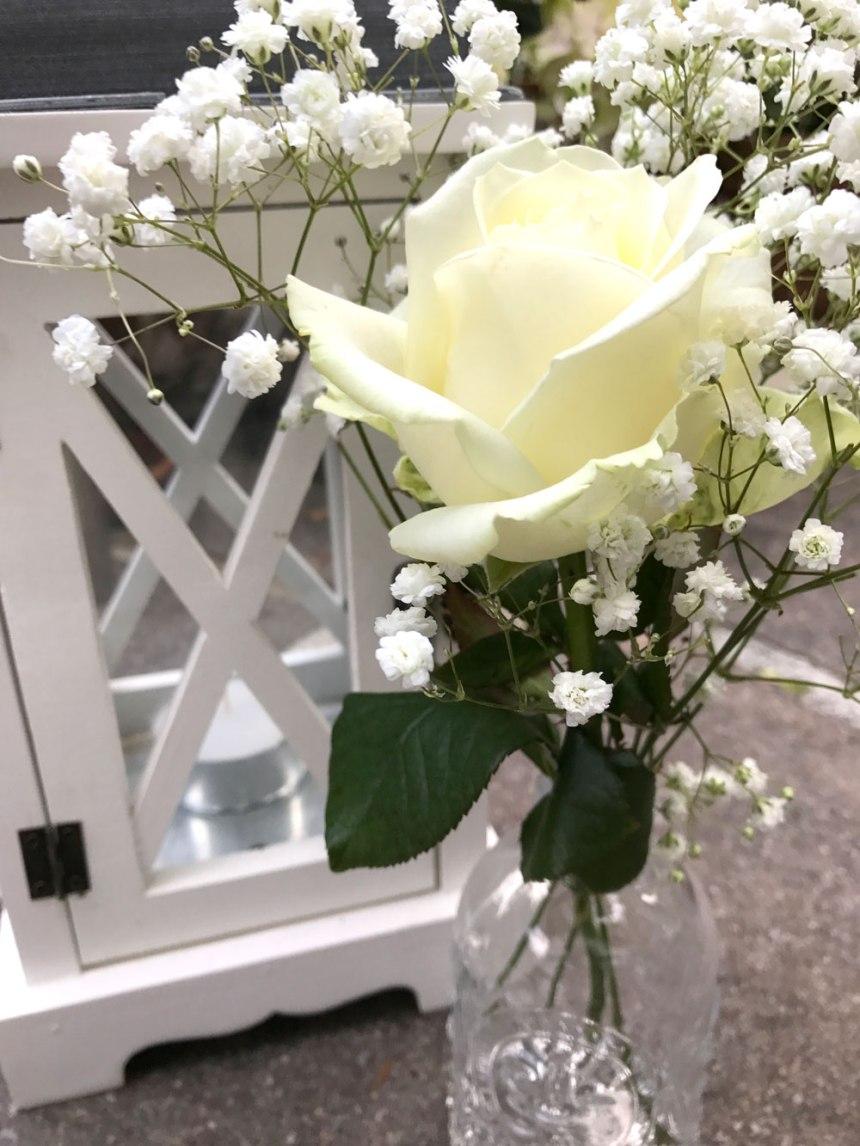 white-rose2.jpg