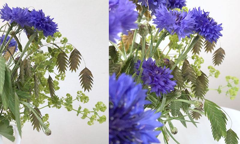 kornblumen-coll1.jpg
