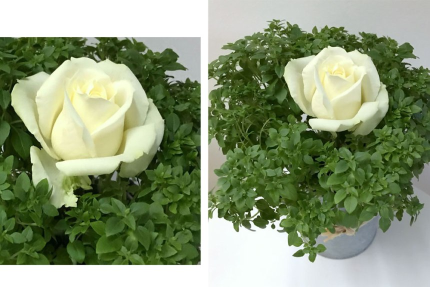 rose-basil.jpg