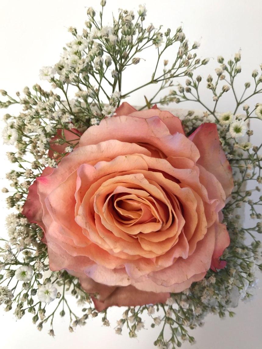 rose-lachs9