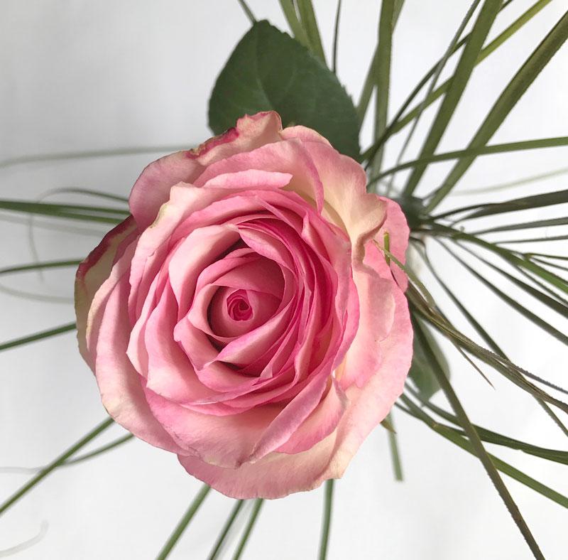 rose-nah.jpg