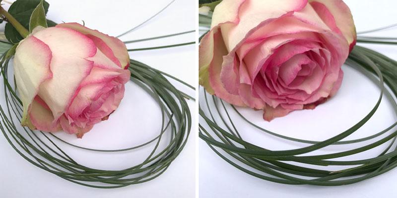 rosen-coll1.jpg