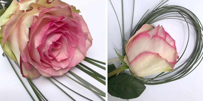 rosen-coll2.jpg
