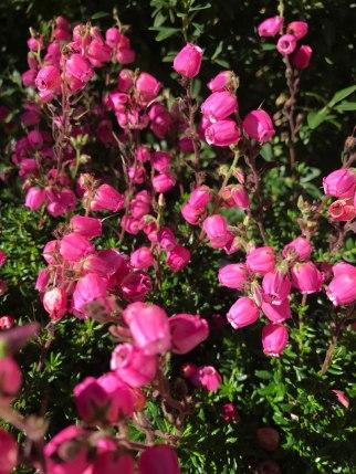 stock-rosa5.jpg