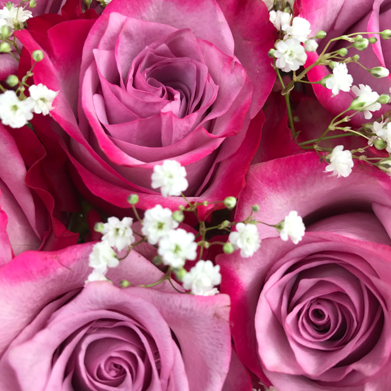rosen-pink3.jpg