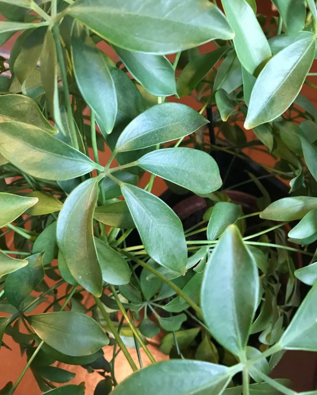 Pflanzen, die natürliche Klimaanlage! – weiss & schwarz
