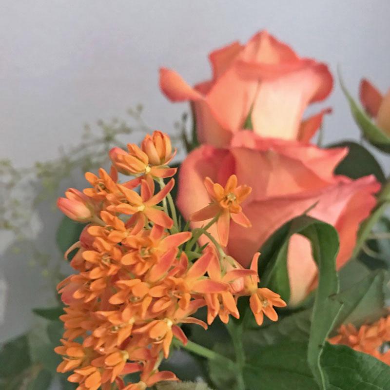 orange-strauss25.jpg