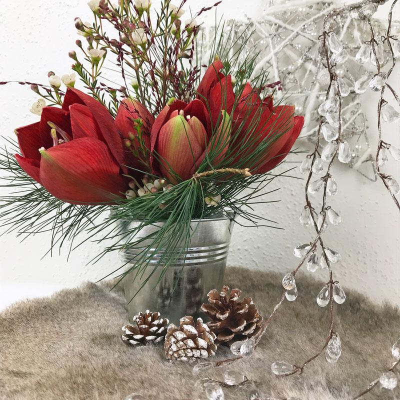 amaryllis-rot.jpg