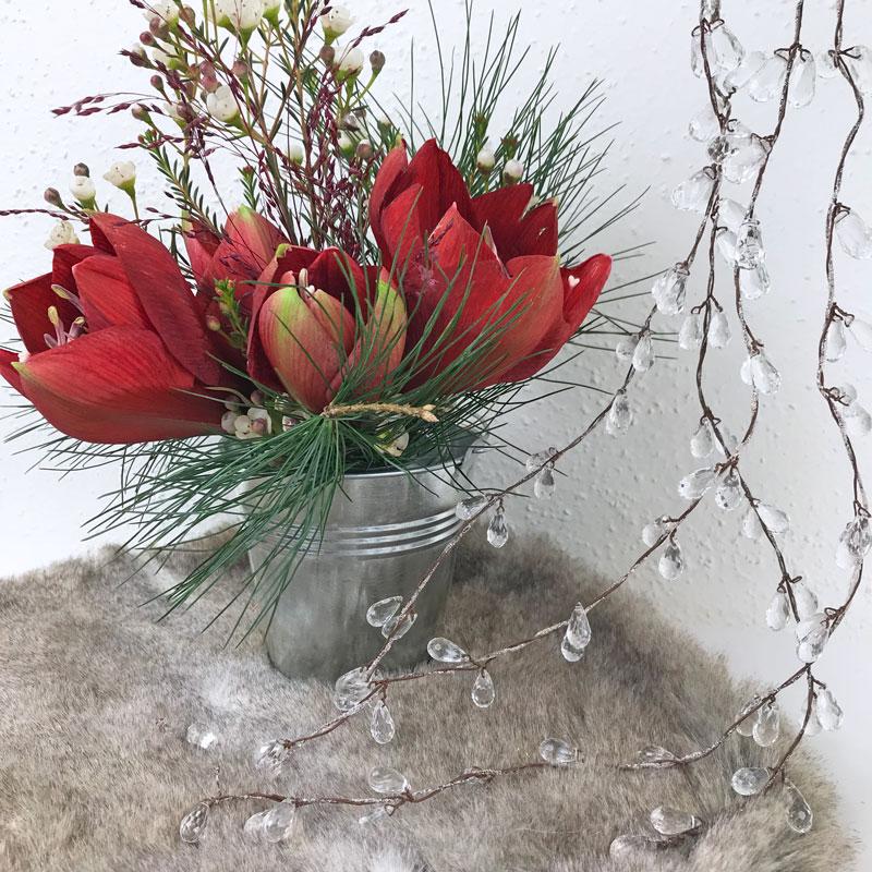 amaryllis-rot12.jpg