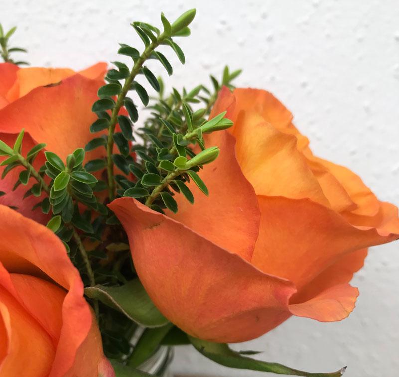 rose61.jpg