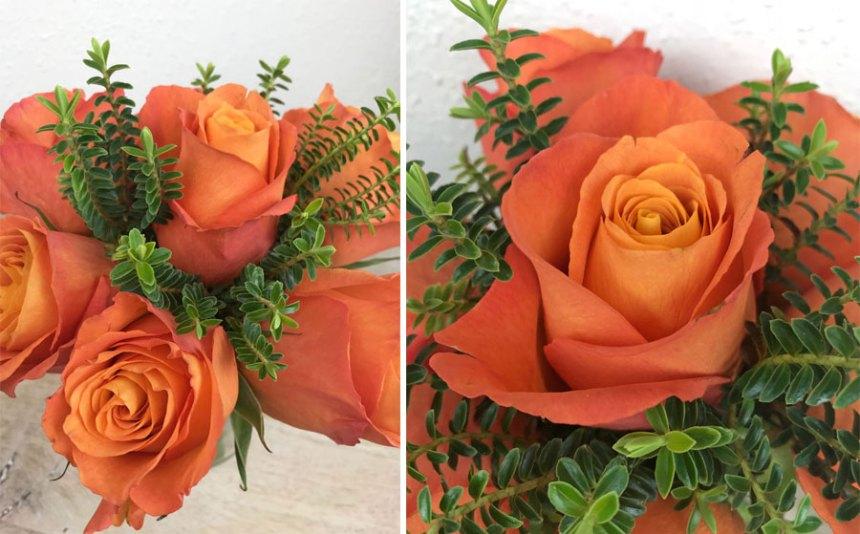 rosen-coll5.jpg