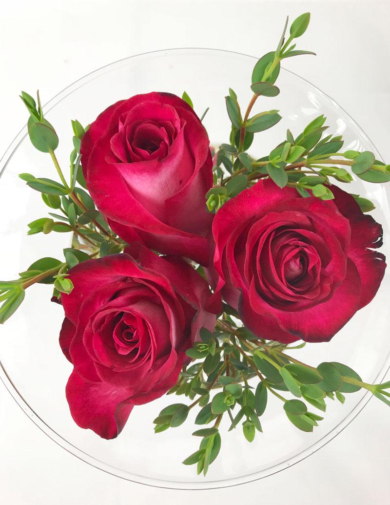 rosen11.jpg