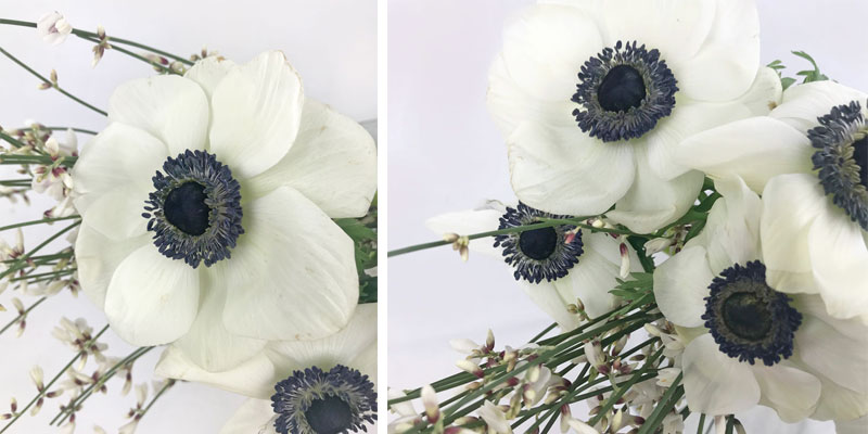 anemon-coll2.jpg
